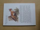 Čapková - Živočichové v přírodě a prvouce (Scientia 1993)