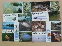 Pohlednice - ryby 11x, foto Sláva Štochl