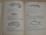 Rybářská příručka (SZN 1964)