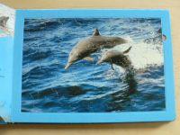 Poznáváme s puzzle - Delfíni (2007)
