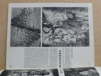 Fotografie 66 - Odborná revue výtvarné fotografie 1 (1966) ročník X.