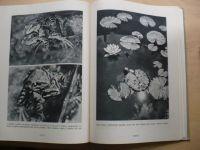 Dr. Obenberger - Rok kráčí přírodou (1943)