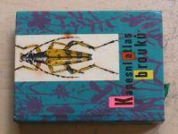 Javorek - Kapesní atlas brouků (1964)