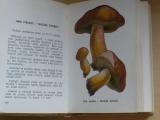 Smotlacha, Novák - Houby v přirodě a kuchyni (1969)