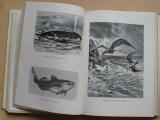 Filip, Šmika - Rok v přírodě (1945)