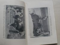 Katalog XIV. výstavy plemenného a kontrolovaného hovězího a vepř.dobytka v Příkazích u Olomouce 1914