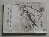 Za zvěří a rybami po Československu (Čedok 1953)