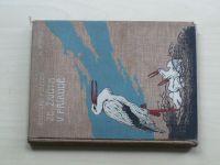 Ewald - Desatero povídek ze života v přírodě (1903)