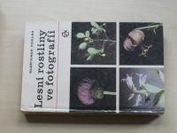 Rabšteinek, Poruba - Lesní rostliny ve fotografii (1983)