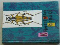Javorek - Kapesní atlas brouků (1968)
