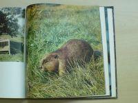 Семаго - Воронежский заповедник - фотоальбом (1981)