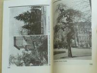 Přibyl - Galerie brněnských stromů (1994)