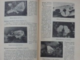 Dr. Matějková - Denní motýli (Vesmír 1942)