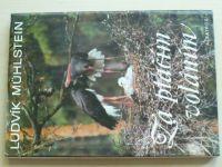 Mühlstein - Za ptačím voláním (1986)