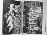 Havlíček - Strážnické slavnosti (1955)