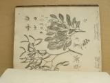 Presl - O přirozenosti rostlin aneb rostlinář (Praha 1825) 2. díl