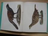 Štěpánek - Naše lovné ptactvo (1962) il. Demartini