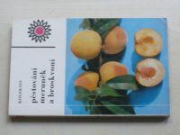 Pěstování meruněk a broskvoní (1974)
