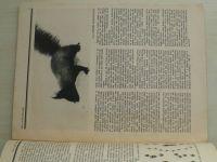 Magazín Haló sobota - Rok v naší přírodě (1990)