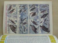 ABC 1-24 (1987-88) ročník XXXII. (chybí čísla 1, 7-8, 15, 17, 20, 24, 17 čísel)