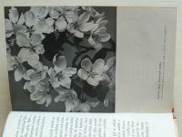 Baldacci - Intimní život rostlin (1941)