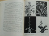Böhmig - Zimmer pflanzen kunde - Pokojové rostliny (1961)
