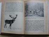 Dr. Kostroň - Myslivost jako živočišná výroba (SZN 1953)