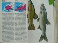Průvodce přírodou - Terofal - Sladkovodní ryby v evropských vodách (1997)