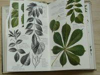 Amann - Bäume und Sträucher des Waldes - Lesní stromy a keře