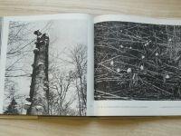 Mráček - Život pralesa (1965)