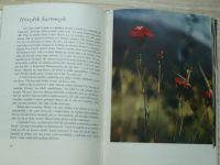 Petrbok, Vrba - Poznáš je, když kvetou? (SNDK 1955) bar. fotografie