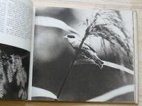 Svoboda - Zapsáno na hladinu (1966) Bohdanecké rybníky