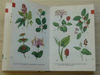 Mikula, Vanke - Kapesní atlas - Plody planých a parkových rostlin (1979)
