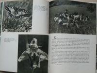 Bučina - Co děti viděly na louce (SNDK 1954)