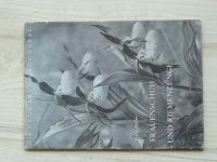Füller - Frauenschun und Riemenzunge (1955) Střčvíčníky, německy