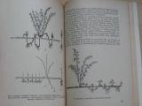 Jašík, Nitka - Pěstujeme drobné ovoce (SZN 1957)