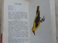 Vilček, Švec - Naše vtáky I.(1963) slovensky