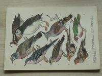 Antonín Pospíšil - Ptáci (1974) 24 volných listů v obálce
