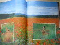 Stoll, Marek - Krásy lesa (1999)