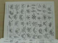 Gilbert - 200 pokojových rostlin pro každého (2001)