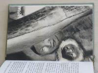 Evans - Sobi táhnou... (1938) kresby Svolinský