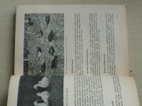 Podhradský - Plemenitba drůbeže (1960)