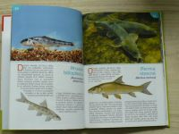 Naše ryby - atlas, Recepty z ryb (2012) edice Receptář