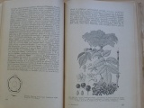 Kavina - Speciální botanika zemědělská 3. (1951) Rostliny srostloplátečné a jednoděložné