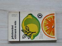 Truhlář a kol. - Pěstování citrusů u nás (1967)