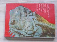 Niedl - Pouště, džungle a hory mých snů - ještěři, hadi, brouci (1978)