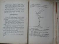MVDr. Lechner - Studie stavby těla jezdeckého koně (Neubert 1931)