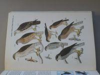 Dr. Černý - Birds (1975) anglicky
