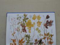 Aranžování květin (2004)