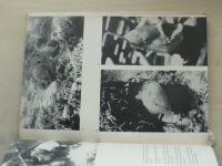 Balon, Seneš - Expedícia Cayo Largo (1967) slovensky